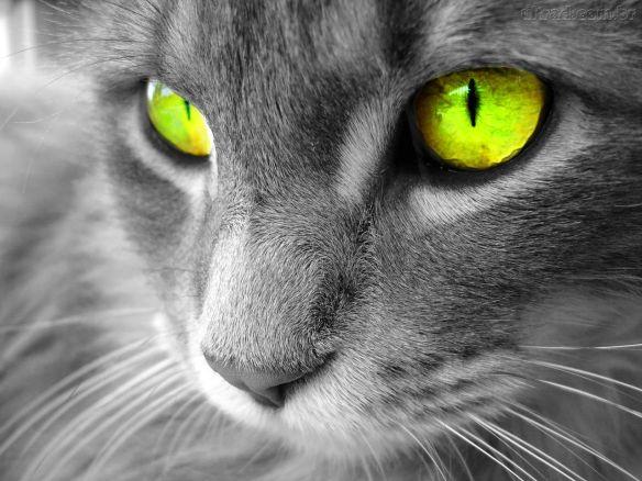 93610_Papel-de-Parede-Gato-de-olhos-verdes_1280x960